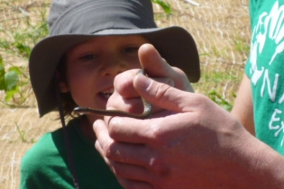 mason_looking_at_garter_snake