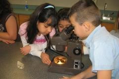 In-School Microscope