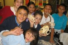 In-School Skulls
